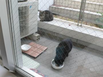 080415cats.jpg