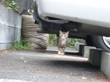 080428cats2.jpg