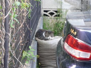 080428cats3.jpg