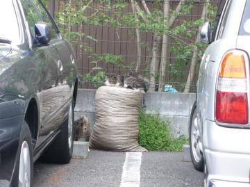 080428cats.jpg
