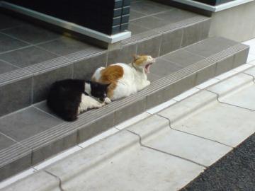 080523cats1.jpg