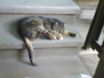 080523cats2.jpg