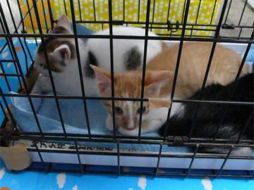080622cats2.jpg
