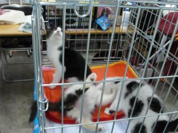 080622cats4.jpg