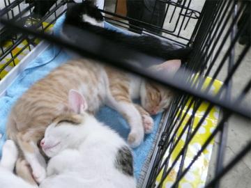 080622cats7.jpg