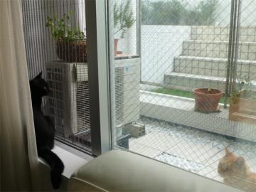 080822cats6.jpg