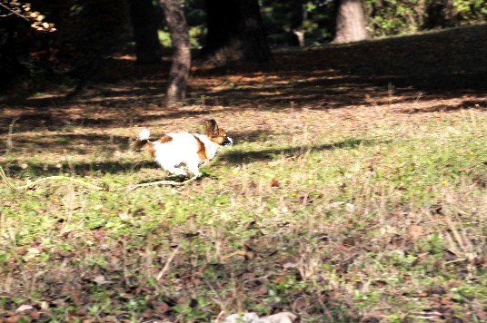 ウサギ走り