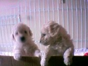 puppies-4