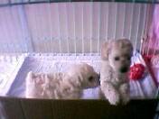 puppies-3