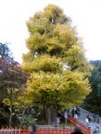blog_icho4.jpg