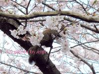 blog_risu.jpg