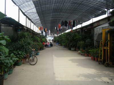 2010_0322星河湾酒店0006