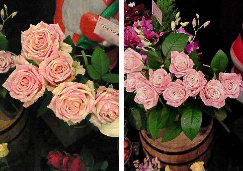20081222薔薇