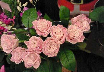 20081222薔薇②