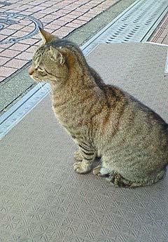 20090107猫