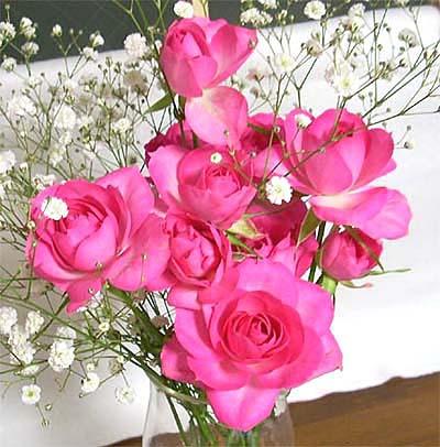 20090108薔薇①