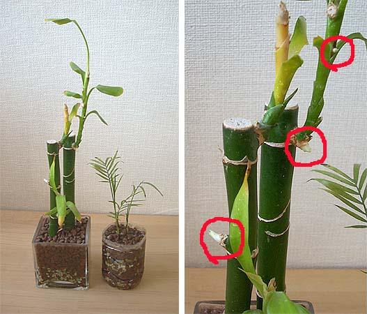 200901011観葉植物