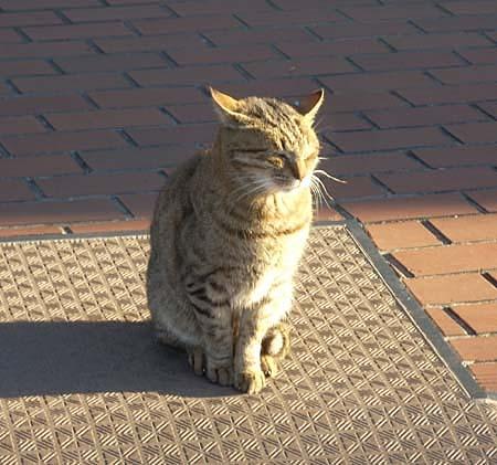 20090113猫①