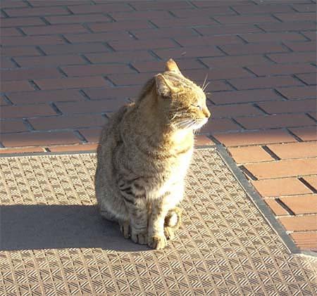 20090113猫②