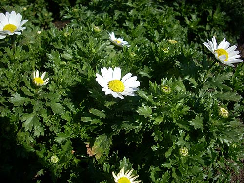 20090208花①
