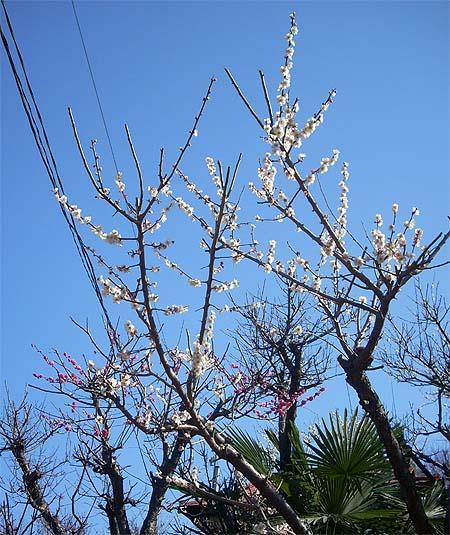 20090208花③