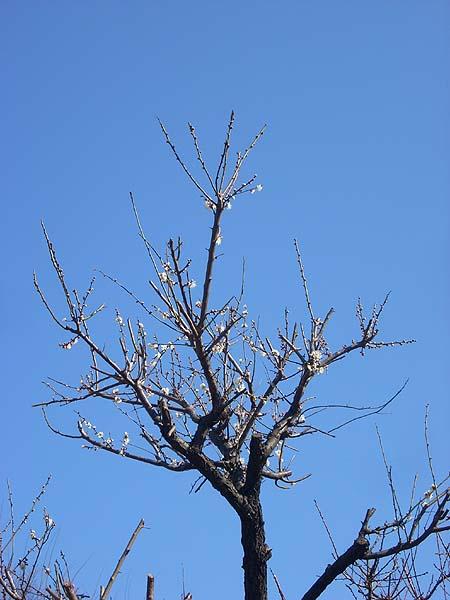 20090208花④