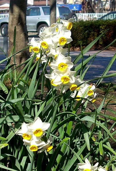 20090208花⑤