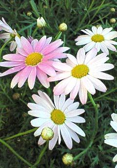 20090215花①