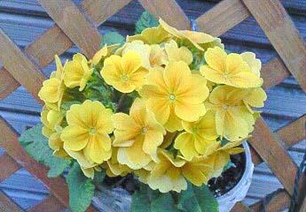 20090215花②