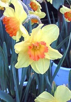 20090215花③