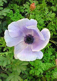 20090215花④