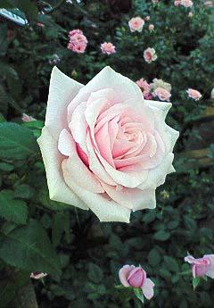 20090215花⑤