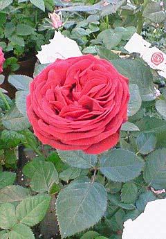 20090215花⑥