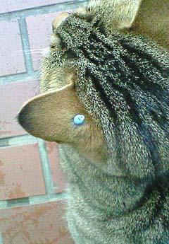 20090220ピアス猫