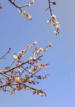 20090221花①