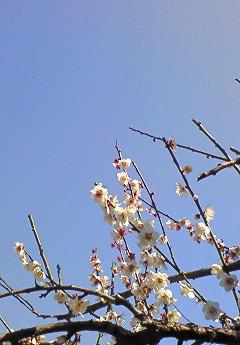 20090221花②