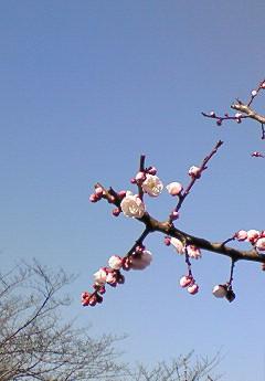 20090221花④
