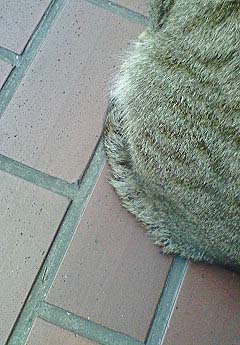 20090224ピアス猫②