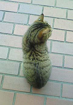 20090224ピアス猫③