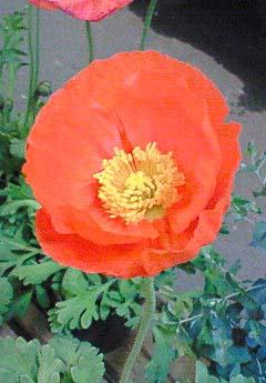 20090219花①