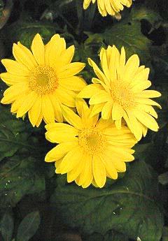 20090219花③