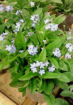 20090219花⑤