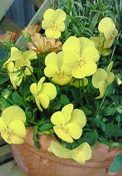 20090219花⑥