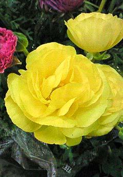 20090219花⑦