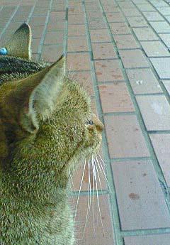 20090227ピアス猫①