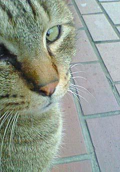 20090227ピアス猫②