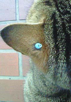 20090227ピアス猫③