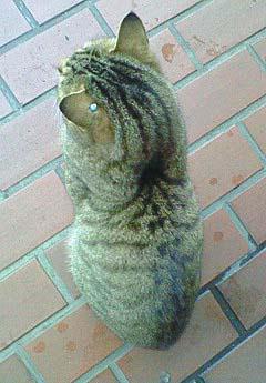 20090227ピアス猫④