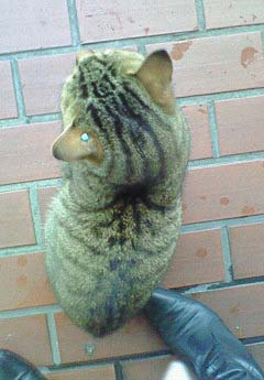20090227ピアス猫⑤