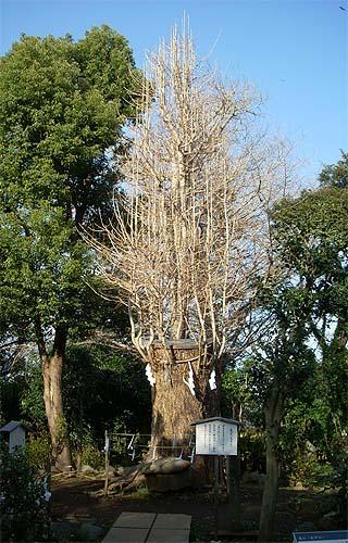 20090320木